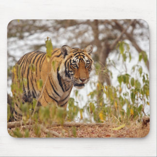 Royal Bengal Tiger walking by the lake side; Mouse Pad
