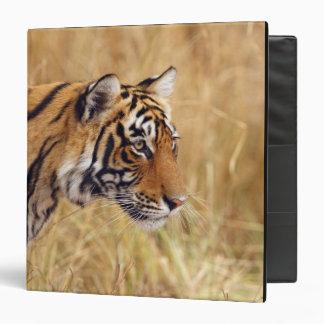 Royal Bengal Tiger watching from the 2 3 Ring Binder