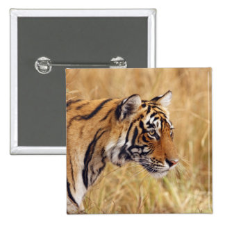 Royal Bengal Tiger watching from the 2 Pinback Button