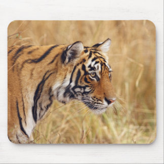 Royal Bengal Tiger watching from the 2 Mouse Pad