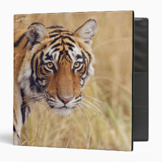 Royal Bengal Tiger watching from the Binder