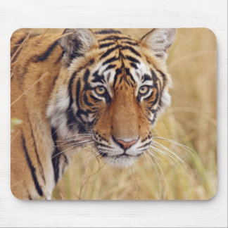 Royal Bengal Tiger watching from the Mouse Pad
