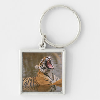 Royal Bengal Tiger yawning in the jungle pond, Keychain