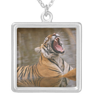 Royal Bengal Tiger yawning in the jungle pond, Silver Plated Necklace
