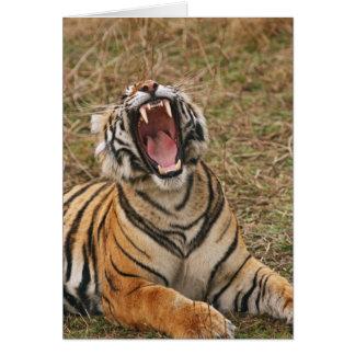Royal Bengal Tiger yawning, Ranthambhor Card