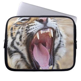 Royal Bengal Tiger yawning, Ranthambhor National Laptop Sleeve