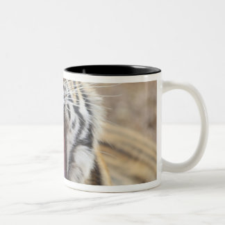Royal Bengal Tiger yawning; Ranthambhor Two-Tone Coffee Mug