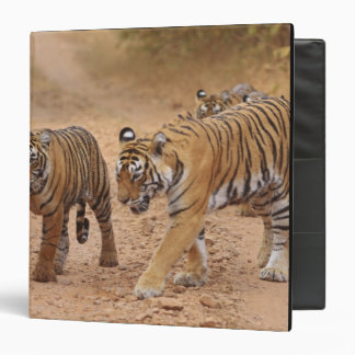 Royal Bengal Tigers on the move, Ranthambhor 2 3 Ring Binder