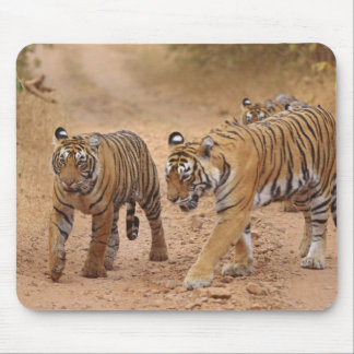 Royal Bengal Tigers on the move, Ranthambhor 2 Mouse Pad