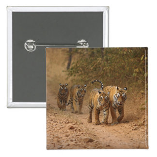 Royal Bengal Tigers on the move, Ranthambhor Button