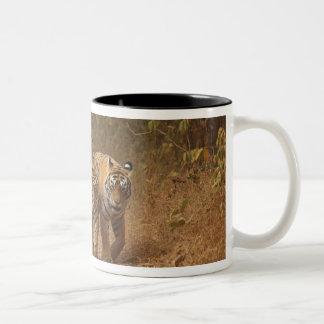Royal Bengal Tigers on the move, Ranthambhor Two-Tone Coffee Mug