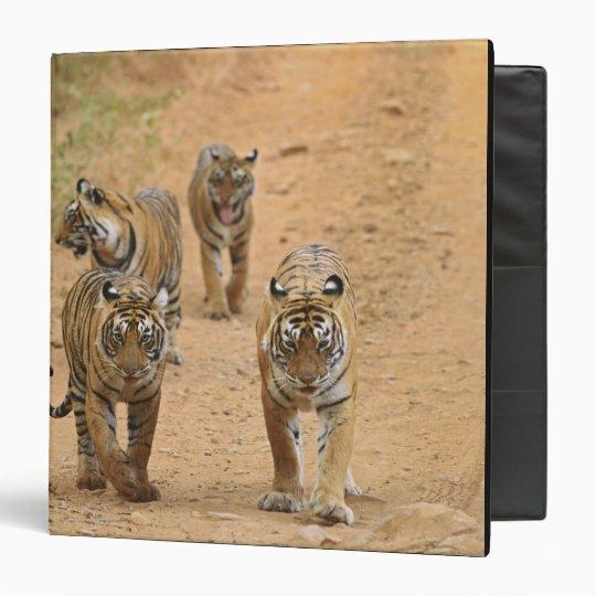 Royal Bengal Tigers on the track, Ranthambhor 2 Binder