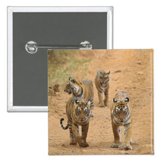 Royal Bengal Tigers on the track, Ranthambhor 2 Buttons