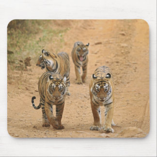 Royal Bengal Tigers on the track, Ranthambhor 2 Mouse Pad