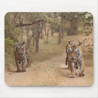 Royal Bengal Tigers on the track, Ranthambhor 3 Mouse Pad