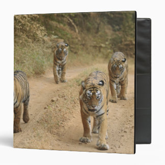 Royal Bengal Tigers on the track, Ranthambhor 4 Binder