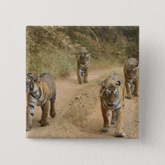 Royal Bengal Tigers on the track, Ranthambhor 4 Button