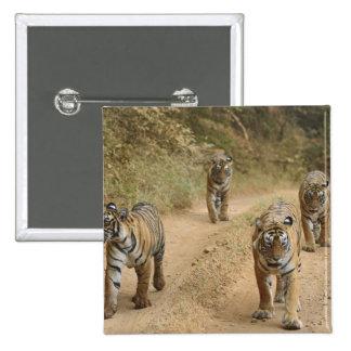 Royal Bengal Tigers on the track, Ranthambhor 4 Pinback Button