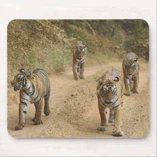 Royal Bengal Tigers on the track, Ranthambhor 4 Mouse Pad