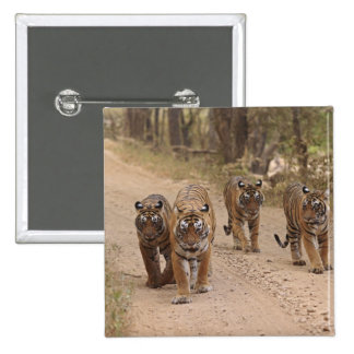 Royal Bengal Tigers on the track, Ranthambhor 5 2 Inch Square Button