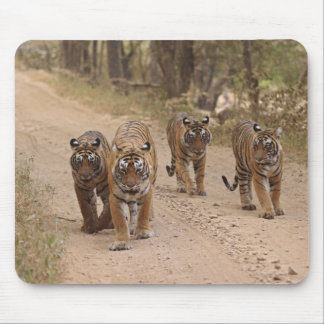 Royal Bengal Tigers on the track, Ranthambhor 5 Mouse Pad
