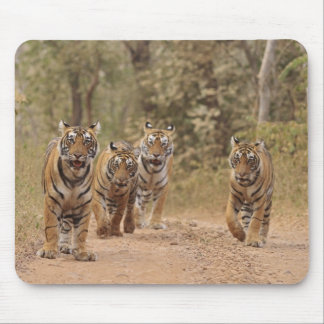 Royal Bengal Tigers on the track, Ranthambhor 6 Mouse Pad