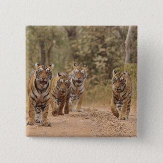 Royal Bengal Tigers on the track, Ranthambhor 6 Pinback Button