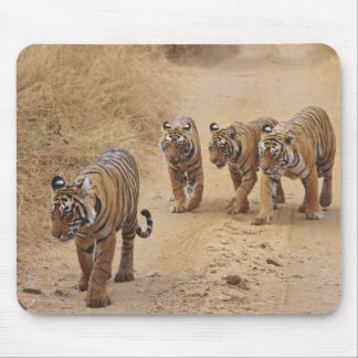 Royal Bengal Tigers on the track, Ranthambhor 8 Mouse Pad