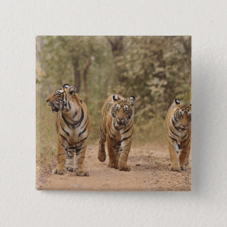 Royal Bengal Tigers on the track, Ranthambhor Button