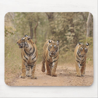 Royal Bengal Tigers on the track, Ranthambhor Mouse Pad