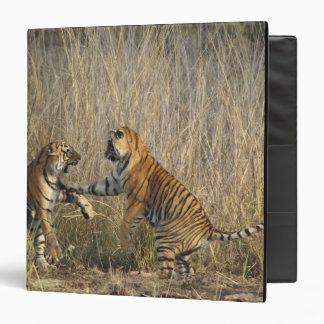 Royal Bengal Tigers play-fighting, Ranthambhor Binder