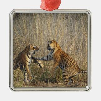 Royal Bengal Tigers play-fighting, Ranthambhor Metal Ornament