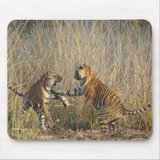 Royal Bengal Tigers play-fighting, Ranthambhor Mouse Pad