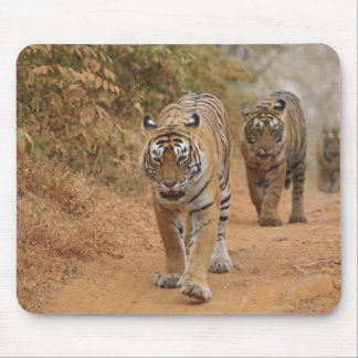 Royal Bengal Tigers walking along the track, Mouse Pad