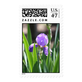 Royal Bloom Postage