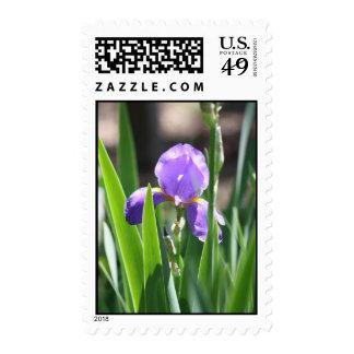 Royal Bloom Postage Stamp