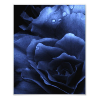 Royal Blue Close Up of a Double Begonia Photo Print