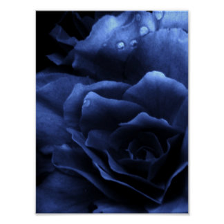 Royal Blue Close Up of a Double Begonia Poster