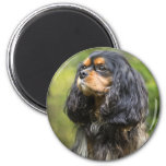 Royal Cavalier King Charles Spaniel 2 Inch Round Magnet