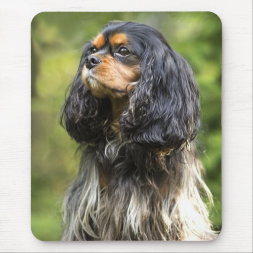 Royal Cavalier King Charles Spaniel Mouse Pad