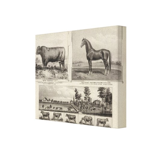 Royal Champion, Joe Young, Kansas Canvas Prints