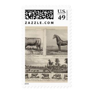 Royal Champion, Joe Young, Kansas Stamps