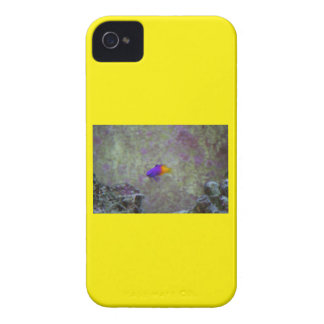 Royal Gramma iPhone 4 Cover