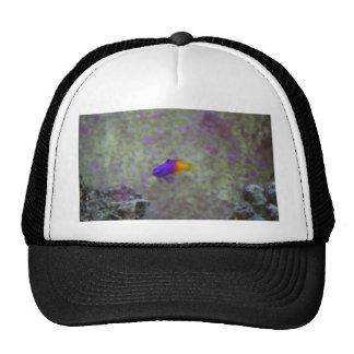 Royal Gramma Trucker Hat