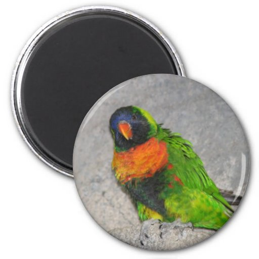 royal-king-australian-parrot 2 inch round magnet