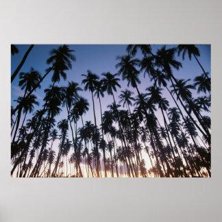Royal Kupuva Palm Grove at Kaunakakai Poster