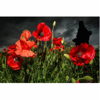 Royal Marine Remembers Cutout
