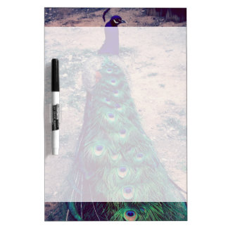 Royal Peacock Dry Erase Board