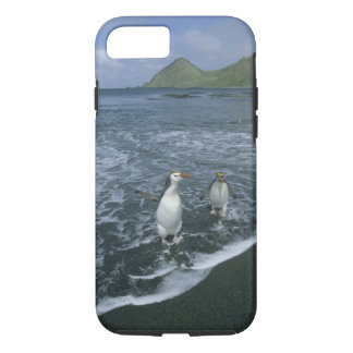 Royal Penguin, (Eudyptes schlegeli), returning iPhone 8/7 Case