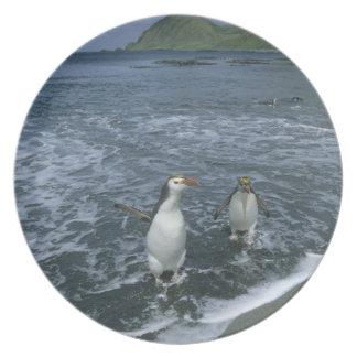 Royal Penguin, (Eudyptes schlegeli), returning Melamine Plate